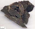 Xuanshen ( Figwort Root )---玄参