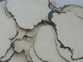 Zhuling ( Polyporus )---猪苓片