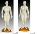 man acupuncture model-75cm