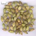 Cangerzi ( Siberian Cocklebur Fruit/  fructus xanthii)---苍耳子
