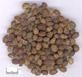 Yadanzi ( Java Brucea Fruit )---鸦胆子