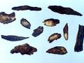 Danshen (Radix Salviae miltiorrhizae/Danshen Root)---丹参