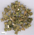 Yimucao (Motherwort Herb)--- 益母草