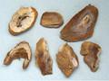 Chuanshanjia (Pangolin Scale)---穿山甲