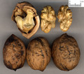 Hetaoren (English Walnut Seed)---胡桃仁