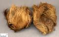 Dafupi(Pericarpium)---大腹皮