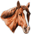 Large Extra Strong Removable Chestnut Horse Car/Truck Magnet!