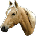 Large Extra Strong Removable Palomino Horse Car/Truck Magnet