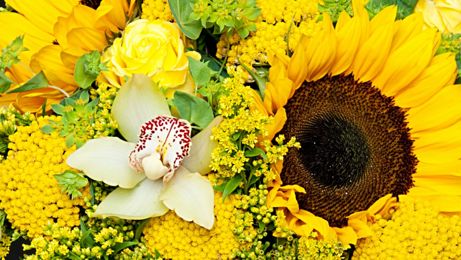 Iberian Beauty Sunflowers Flower Delivery London Same Day Flowers