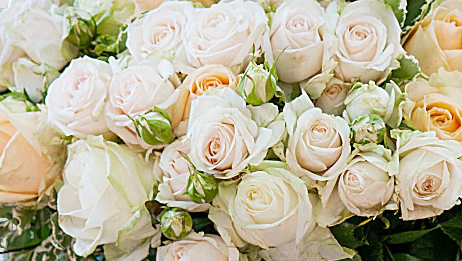 saint-germain-bouquet-flower-station.jpg