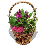 Pink Basket of Plants and Foliage