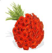 50 Orange Gerbera