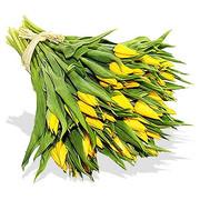 50 Yellow Tulips