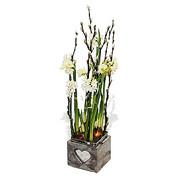 Daffodil Love Pot