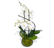 white orchids in a pot