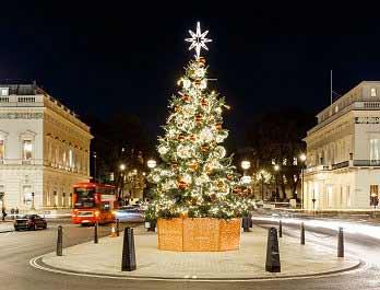 London Tree Installation