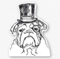 Bulldog, Winston: Looking like Sir Winston!