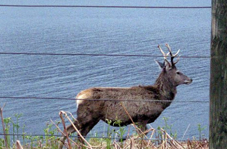 red-deer-fence-cr.jpg