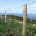 HT8/80/15 100m Stock Fencing