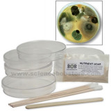 Bacteria Growing Kit - Science Fair Size