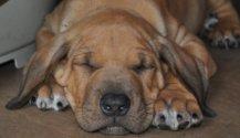 luca-and-elvis-pups-21st-june-11-285.jpg