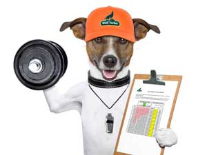 wolftucker-fitness-dog-diary.jpg