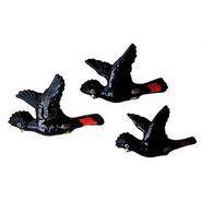 STUDIO AUS flying black cockatoos