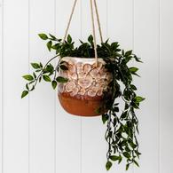 RAYELL grand feu hanging planter
