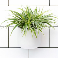ANASAZI okidome suction planter