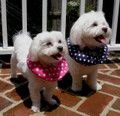 Puppy Bumpers Soft Padded Collars designed to Stop Dog Escapees under gates or from your balconys.