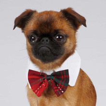 Festive dog Dickie Bow and Collar