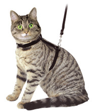 Cat Velour Leather Harness -  Red available