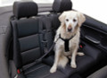 Dog Seat Belt - keep your pet safe and secure.