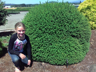 Emmy next to Fat Cat Norway Spruce