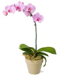 las-vegas-florist-orchids.jpg
