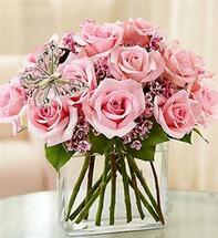 Modern Roses - One Dozen Pink
