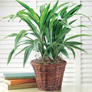 plant-care