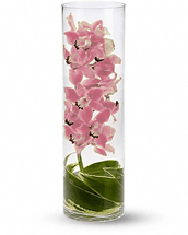 Cymbidium Orchid in Cylinder Vase