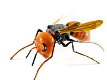 Matsumoto Kurosawa Bee