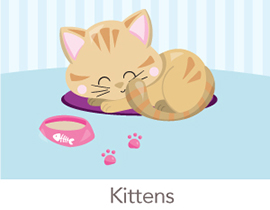 kittens-gifts-spark-and-spark-270.jpg