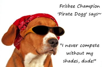 Pirate Dogg