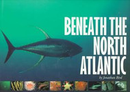 Beneath the North Atlantic