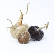 NEW - Velvet Pumpkin Trio - Natural