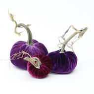 NEW - Velvet Pumpkin Trio - Purple