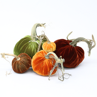 Velvet Pumpkin Large Set - Harvest