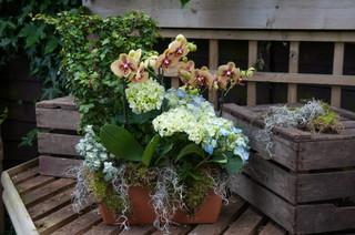 Orchids and Hydrangea