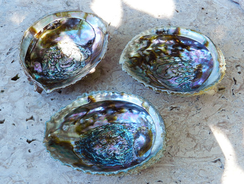 Abalone Shell Smudge Vessel 6""