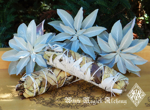 "Yerba Santa and White Sage Smudge Wand 5"" for Banishing Negative Energy, Clearing, Renewal"