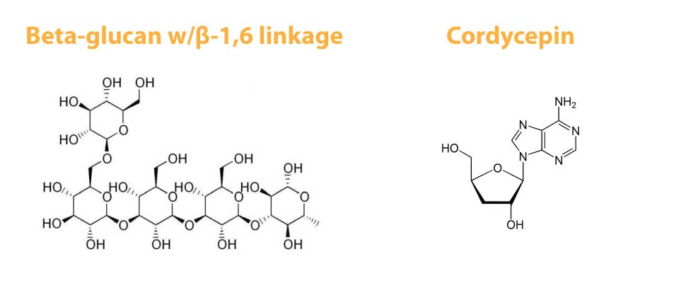 Beta-Glucans and Cordycepin