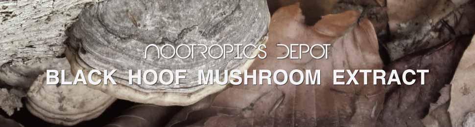 Buy Black Hoof Mushroom